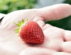 木村イチゴ農園